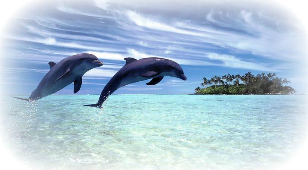 delfines-comercio