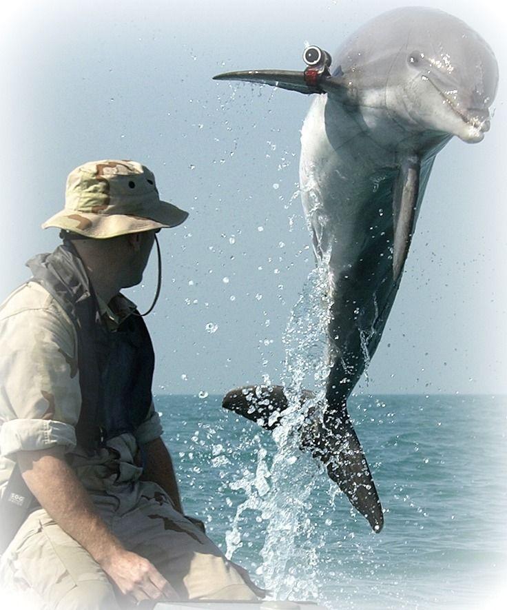 delfines-ejército