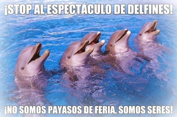 stop-delfines